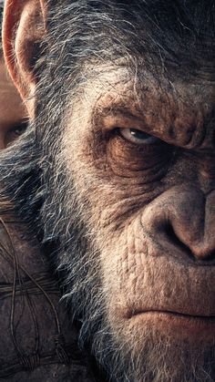 War For The Planet Of The Apes https://t.co/qtAtH3QZ5t