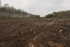 Image result for forest cut down