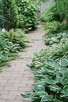 雑草天国だったこの場所にレンガの小道をつくり、その両側に、半日陰~日陰を好む植物を選んで植えたのは、2003年秋のこと。