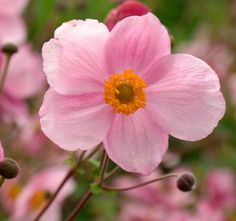 Flower Gardening Tips - Help Creativity Bloom in Your Flower Garden Garden Shrubs, Garden Landscaping, Flowers Perennials, Planting Flowers, Sea Holly, Vegetable Garden Tips, Flora Flowers, Border Plants, Bloom Blossom