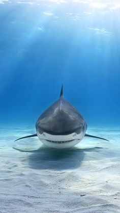 Shark - Sea Life - Ocean - from LIFE UNDER THE WAVES