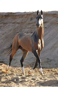 Bildergebnis für The Most Beautiful Horse Ever