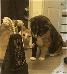 Cats vs metronome. [video]
