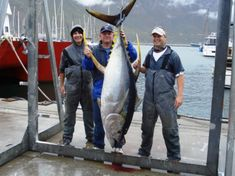 Hooked on Africa Fishing Charters | Cape Town | Deep Sea Fishing - Dirty Boots Tuna Fishing, Trout Fishing, Fishing Trips, Volvo Ocean Race, Charter Boat, Table Mountain, Fishing Charters, Deep Sea Fishing, Adventure Activities