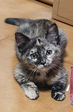 Kittens Cutest, Cats And Kittens, Cute Cats, Animals And Pets, Baby Animals, Cute Animals, Pets 3, Cat Aesthetic, Grey Cats