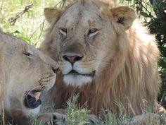Lo Mejor Del Norte de Tanzania, Lyon Safari Privados o en Grupo