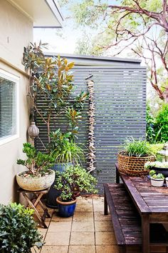 A Balinese holiday inspired the design of this lush and tropical garden in Sydney's Northern Beaches. The owners selection of tropical plants fit in perfectly to their coastal location, creating a holiday-like haven all year round. Tropical Patio, Tropical Garden Design, Tropical Landscaping, Tropical Plants, Backyard Landscaping, Porch Plants, Potted Plants, Alfresco Area, Beach Gardens