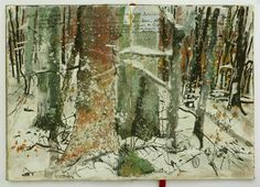 snow rain, winter forest
