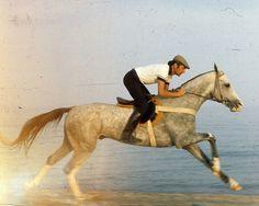 Old photo of Akhal Teke