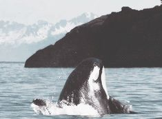 Freedom is priceless., blackfishsound: By Monterey Bay Research...