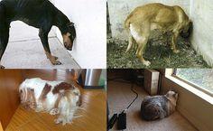 Se um animal fizer isso, leve-o imediatamente ao veterinário! | SOS Solteiros
