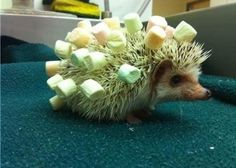 Good reason to bring your hedgehog on a camp out :)