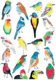 Tropical Bird Illustration Card by xmisslivx on Etsy, Art And Illustration, Painting Illustrations, Tropical Birds, Bird Drawings, Bird Pictures, Watercolor Bird, Cute Birds, Beatrix Potter, Bird Prints