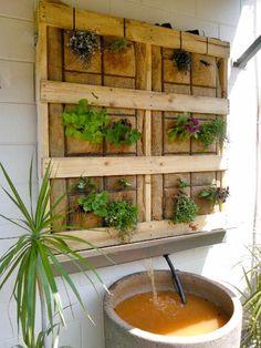vertical aquaponic garden using a pallet & a very large pot- Keri Kessler-Christian, Amanda Constable
