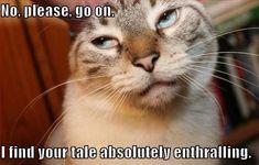 FUNNY ANIMAL MEMES TUMBLR image memes at relatably.com