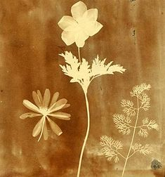 William Henry Fox Talbot: A photo of a monochrome brown photo of flowers