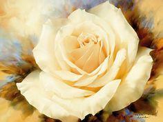 Igor Levashov : One Champagne Rose