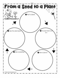 A seed to plant worksheet showing the plant cycle. From a Seed to a Plant Science Worksheets, Science Activities, Science Fun, Science Ideas, Science Experiments, About Me Poster, Teaching Plants, First Grade Science, Plant Science