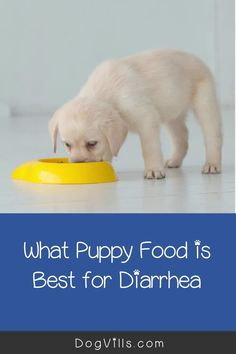 What puppy food is best for diarrhea?That question is far more common than you might think, especially considering the fact that puppies have sensitive tummies! Best Dog Food, Best Dogs, Puppy Food, Types Of Food, Dog Food Recipes, Facts, Puppies, This Or That Questions, Cubs