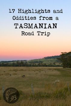 A Tasmanian Road Trip: 17 Highlights and Oddities Here are a few of the highlights and oddities you may encounter during a four day Tasmanian road trip in Australia. The island state is worth a visit. Brisbane, Melbourne, Sydney, Tasmania Road Trip, Tasmania Travel, Travel Advice, Travel Guides, Travel Tips, Travel Oz