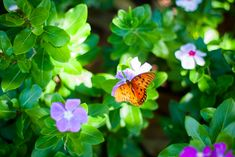 40+ Gardening Hacks The Pros Don't Want You To Know Flowers That Attract Butterflies, Beautiful Butterflies, Butterfly Flowers, Butterfly Wings, Butterfly Cross Stitch, Butterfly Pattern, Butterfly Shower Curtain, Green Pictures, Butterfly Pictures