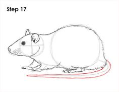 Learn how to draw a rat (common or fancy pet rat) with this how-to video and step-by-step drawing instructions. Animal Sketches, Animal Drawings, Drawing Sketches, Drawing Drawing, Cartoon Drawings, Art Drawings, Pet Rat Cages, Red Fox Tattoos, Rat Tattoo