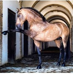 All The Pretty Horses, Beautiful Horses, Animals Beautiful, Cute Horses, Horse Love, Horse Photos, Horse Pictures, Animals And Pets, Cute Animals
