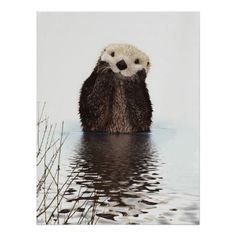 I've seen a lot of cute creatures. I mean a lot. But I don't believe I've seen anything cuter than this otter pic. Maybe AS cute, but not cuter. Cute Creatures, Beautiful Creatures, Animals Beautiful, Beautiful Smile, Nature Animals, Animals And Pets, Happy Animals, Smiling Animals, Animals Photos