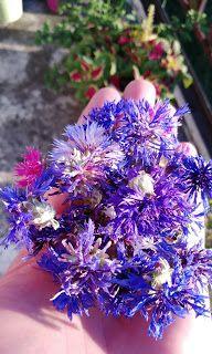 de la Mejika Plants, Jewelry, Jewlery, Jewerly, Schmuck, Jewels, Plant, Jewelery, Fine Jewelry