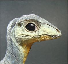dinoaurs with bony head plates | View image
