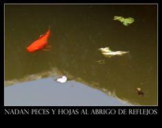 Nadan peces y hojas al abrigo de reflejos