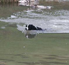 Speed swimmer