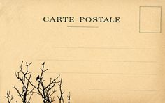 vintage postcard bird tree