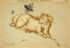 aries   http://fc02.deviantart.net/fs39/i/2008/350/a/3/Vintage_Astrology_Aries_by_HauntingVisionsStock.jpg