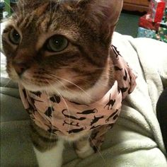 ラブリー-KittyCats、fuckyeahfelines:ちょうど私の猫は私の猫を揺らし...