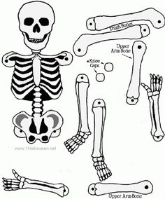 SKELETON CRAFT we used for science unit on human body/art project for Halloween party.the kids loved Graders. Theme Halloween, Holidays Halloween, Halloween Crafts, Holiday Crafts, Holiday Fun, Happy Halloween, Halloween Decorations, Halloween Clothes, Halloween Printable