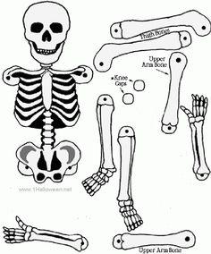 esqueleto humano montar - Cerca amb Google
