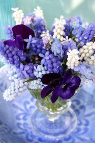 Diminutive arrangement of grape hyacinths, forget-me-nots, pansies. Madelief: April garden