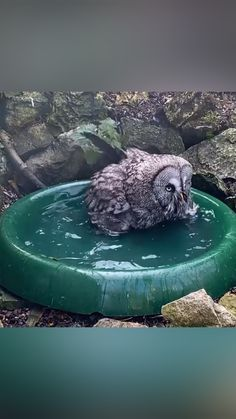Owl Photos, Owl Pictures, Funny Owls, Cute Funny Animals, Beautiful Owl, Animals Beautiful, Nature Animals, Animals And Pets, Animal Antics