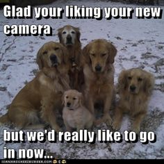Glad your liking your new camera  but we'd really like to go in now... #goldens #retrievers #pets