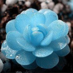 Hot Radiation-proof Creative Decorative Succulents Seeds Flower Plant 60pcs TL | Home & Garden, Yard, Garden & Outdoor Living, Plants, Seeds & Bulbs | eBay!