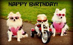 Happy Birthday Dog biker gang
