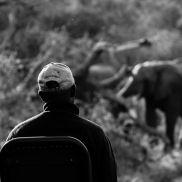 Tracking Instincts | krazywithtravel African Wild. Sabi Sand. Kruger National Park. Summit Lake, Working Blue, Spring Lake, Kruger National Park, African Safari, Narnia, Blues, Track, Runway