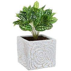 Amazon.com: 6 Inch Decorative Spiral Design Square White Ceramic Plant Flower Container Pot / Windowsill Planter: Patio, Lawn & Garden