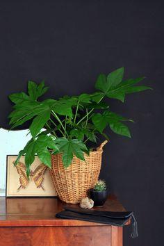 Wohnen in grün I Zimmerpflanzen Plantlove I nachhaltig Einrichten und Wohnen I  Ideen Dekoration I Minza will Sommer