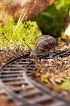 *Coming down the Track (Snail)