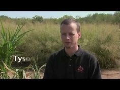 ▶ Effect of Drought on Biomass Plants - Developing a Sustainable Biomass Production System - YouTube