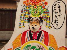 Emperor Shiba Inu
