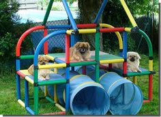 Dog playground. This could be done with some garden sculpture, along with providing a high roost for the dog.