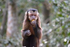 Zuid-Afrika - Monkeyland